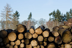 ckuchem-7141 (christine_kuchem) Tags: abholzung baum baumstmme bume einschlag fichten holzeinschlag holzwirtschaft wald waldwirtschaft
