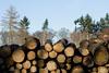 ckuchem-7141 (christine_kuchem) Tags: abholzung baum baumstämme bäume einschlag fichten holzeinschlag holzwirtschaft wald waldwirtschaft