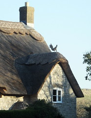Thatched cottage in Dorset village... each thatcher has his own style.. this one includes animals in the design.. the chicken is part of the thatch... (Sue - happy sparrow) Tags: thatchedcottage cottage chicken thatch thatching dorset poxwell winter stronglight light shade