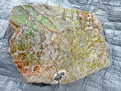 Southern AB Field Trip D2-096 - Korilite Ammolite Quarry (Oct-05-2016) (MistyTree Adventures) Tags: canada alberta panasoniclumix southernalberta outdoor koriliteamolitequarry gemstone ammolite organicgemstone