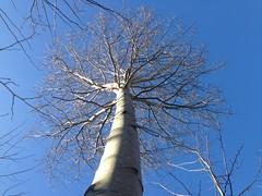 iph504 (gzammarchi) Tags: italia paesaggio natura montagna firenzuolafi moraduccio ronco selvadiquedina albero pioppo inalto monocrome explore