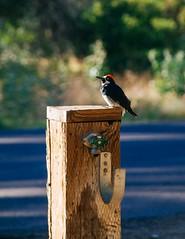 Cuyamaca Rancho SP (shimonkey) Tags: cuyamaca rancho california sandiego park nature landscape