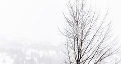 Tree in a cold context (Wa So) Tags: arbre brouillard chamrousse k3 lightroom nb neige pentaxda55f14