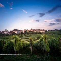 - vignes - (FRJ photography) Tags: alsace riquewihr france vin wine vignoble rue street sunset coucher du soleil sun color couleur europe ville city alsacien hautrhin façade colombage timbered sqarre carré ciel sky 68 urbain urbanisme immeuble building maison house village romance romantique extérieur route vigne vine
