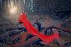 self - little red riding hood (Hana Makovcova) Tags: selfportrait hanamakovcova surreal surrealism surrealist surrealphotography levitation weird forest red