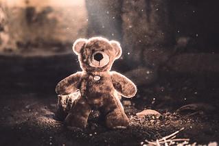 [ cuddly bear ]