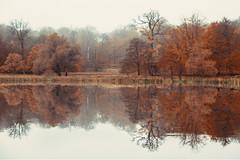 untitled (Esben Bøg) Tags: digital canon6d fern golden ordrup denmark tamron 2470mm reflection fog forest dyrehaven lake outdoor water sky