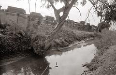 Cerrito Creek (efo) Tags: bw film elcerrito cerritocreek zarya