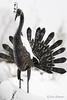 Winter bird (Joni Salama) Tags: talvi lintu eläimet luonto patsas photoshop topazlabs valkoinen