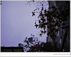 Snap... (HARU1231) Tags: snapphoto panasonicgf1 rain korea
