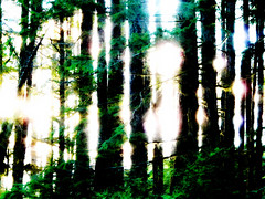 colours of light (calamityjan2008) Tags: forest trees light sun sunbeams colorsofthespectrum colorsoftherainbow forestspirits beingsoflight magicalthinkng angelsoftheforest lightthroughtrees bc vancouverisland