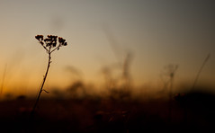 Golden hour (Marius K. Eriksen) Tags: golden hour natureporn nature rsneskilen norge norway stfold halden winter vinter sunset solnedgang