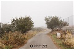 Sigue la niebla (Art.Mary) Tags: niebla brouillard fog paisaje paysage landscape gójar granada andalucía españa spain espagne canon nature naturaleza olivos arbres trees árboles camin chemin road