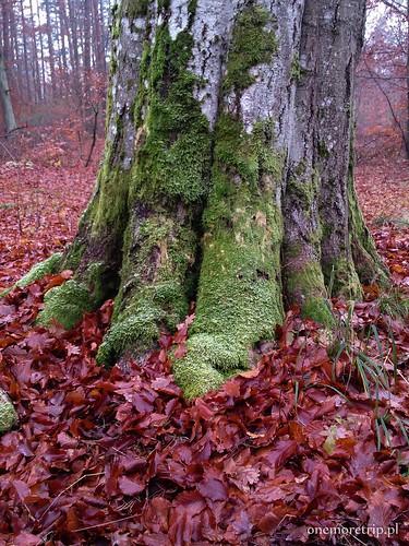 161111-135326-luboradza lasy