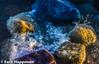 Different color stones (Eero Happonen) Tags: 2017 helsinki nikkor1250mm nikond300 uutela vuosaari sea stone finland
