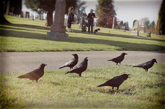 crows and dogs (annapolis_rose) Tags: vancouver mountainviewcemetery cemetery crows corvid dogs dogwalking