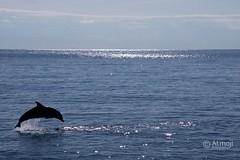 The beauty of a #dolphin jump. #photooftheday #wildquest #wildandfree #wilddolphins @atmoji