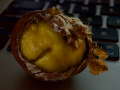 Chestnuts 20161121 (caligula1995) Tags: 2016 chestnut computer macro