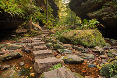 Walk Into The Canyon || GRAND CANYON || BLACKHEATH (rhyspope) Tags: australia aussie nsw new south wales canon 5d mkii blue mountains grand canyon blackheath rhys pope rhyspope green tree fern moss wet rainforest woods forest creek stream path track trail stones cliff valley