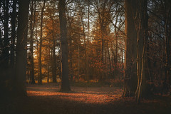 (TanieBlue) Tags: tanieblue 5dii canon canonphotography photos canonphoto photographerbelgium photographebelgique photography photo sigma photographie canonbelgique instagram 500px flickr photographesliegeois photographesfrancophones color couleur forest colonster trees landscape sun autumn