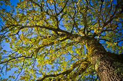 tte en l'air (Denis Vandewalle) Tags: arbre tree nature sky blue denisvandewalle pentaxk5