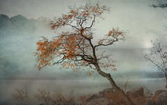morning has broken (Weirena) Tags: nature weirena ireneweisz landscapes scenes seasons bavaria europe fall fineartphotography wallart trees textured autumn fog misty eibsee bayern