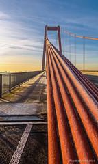 Rheinbrücke im Detail (mr.wohl) Tags: architektur befestigung blau brücke brückenpfeiler brückenturm detail drahtseil drahtseile haltedraht halterung himmel perspektive rhein rheinbrücke seil sicherheit sonnenaufgang stahl stahlseil turm verankerung verbindung wasser zugseil