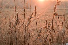 DN9A9328-2 (Josette Veltman) Tags: sunrise zonsopkomst salland overijssel soeslo zwolle landschap natuur landscape nature netherlands
