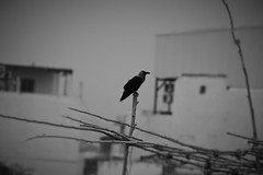 B/W (rahul_rrk) Tags: black white bw vignette edit photography canon eos dslr background blur foreground focus flickr depthoffield dof outdoor pondicherry painting