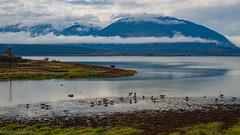 Wetland and Mountain (kensparksphoto) Tags: shuswaplake sabnes salmonarm britishcolumbia bc canada ducks wetland november nature