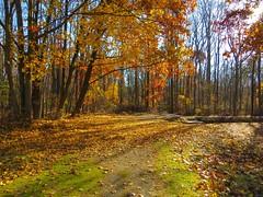 IMG_9124 (rpealit) Tags: scenery wildlife nature east hatchery hackettstown