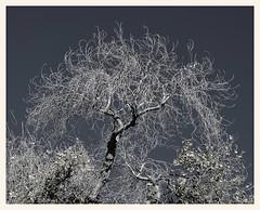 Winter Has Come (gauchocat) Tags: arizonasonoradesertmuseum tucsonarizona