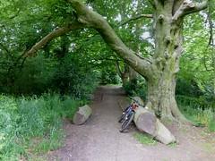 Abney Hall (stillunusual) Tags: uk england tree bike bicycle trek manchester cycling mountainbike treetrunk naturereserve stockport mtb hardtail abneypark 2014 mcr cheadle abneyhall abneyhallpark