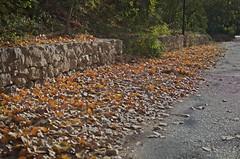 Autumn (ndrg) Tags: sote sotdechera sot de chera ndrg ndrg2 d5100 35mm 35mm18 nikon nikkor oscar jimenez oscarjimenez óscarjiménez