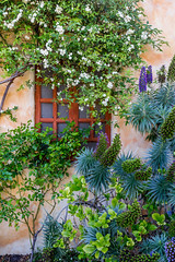 Garden window at Carmel Mission (Rod Heywood) Tags: flowers window wall garden purple lavender foliage adobe carmel mission juniperoserra missions carmelmission frserra adobewall spanishmissions gardenwindow
