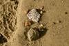 DSC_0329 (Laurie Vezina) Tags: ocean shells beach seaside sand rocks waterfront maine pebbles essenceofmaine holycreationsofnature