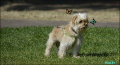 dog butterflies woof cute leash alert pet outdoor animal canine collar insects