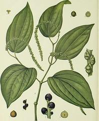 Anglų lietuvių žodynas. Žodis entire leaf reiškia visą lapų lietuviškai.