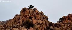 """""""En la Cima un Arbol..."""" Foto:El Lemus (El Lemus) Tags: california sky art clouds america mexico la rocks arte desert cloudy el tecate cielo desierto baja skys rocas mexicali clod rumorosa lemus"""
