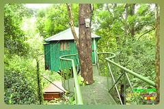Silent Valley---------------32 (Binoy Marickal) Tags: india green tourism nature water rain kerala mala palakkad evergreenforest treaking silentvalleynationalpark nilgirihills mannarkkad mukkali kuzhur indiabinoymarickal