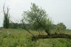 DSC06379 (Ton Smilde) Tags: oostvaardersplassen naturereserveinthenetherlands