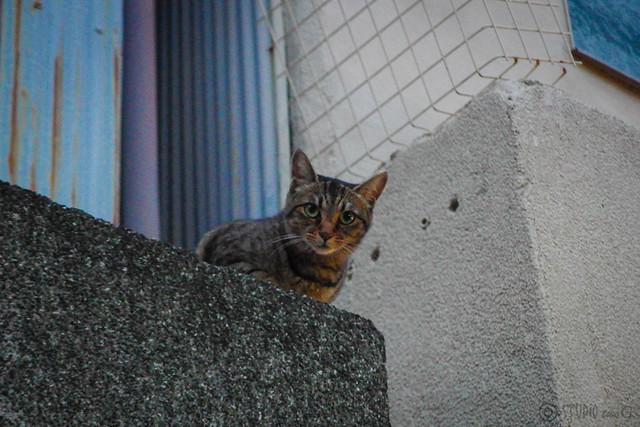 Today's Cat@2014-07-18