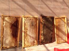 μελισσοκομία η παραγωγή 2014
