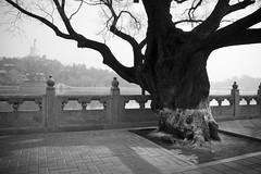 Beihai Park (chinese johnny) Tags: china blackandwhite bw canon20d beijing beihaipark 2007 flickrunitedaward