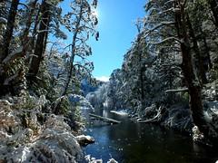 paraso nevado (Camila Mateluna) Tags: snow water lago nieve parquenacional araucania huerquehue