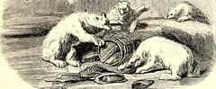 Anglų lietuvių žodynas. Žodis barrel knot reiškia barelį mazgas lietuviškai.