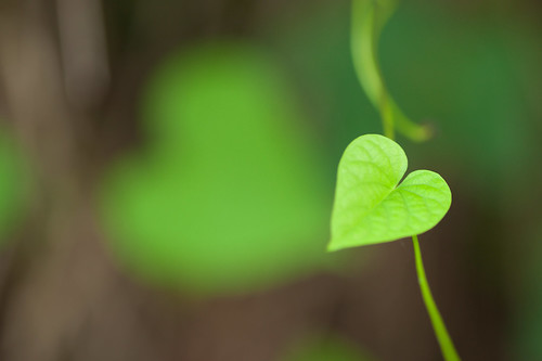 Spread Love! by VinothChandar, on Flickr
