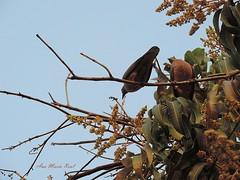 Naturaleza (anitareal) Tags: naturaleza luz hojas foto arte personal aves pjaros cielo rbol grupo animales fotografia sombras libre rama ciclo