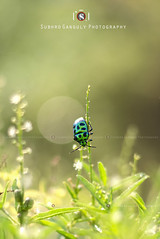 Bugs Life (SUBHROCLiCKS) Tags: life india animal photography all time  streetphotography insects august bugs busy rights bengal reserved calcutta 2014 ganguly wildlifephotography incredibleindia subhro nikond7000 subhroclicks subhroganguly infrontoflife subhrogangulyphotography