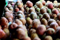 (samer_baik) Tags: cactus fruits saudi saudiarabia ksa